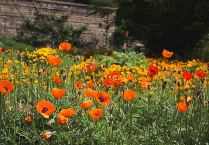 Gartenmärkte – Infos und Zahlen