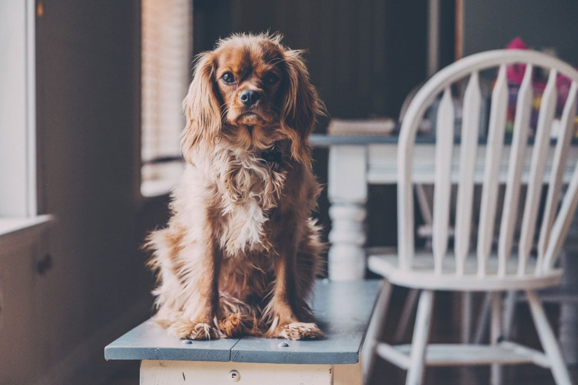 Tipps rund um die Pflege des Hundes