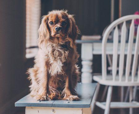 Tipps rund um das richtige Hundefutter