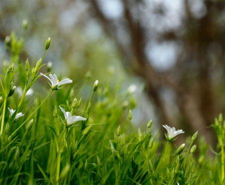 Die besten Gartentipps im Juni